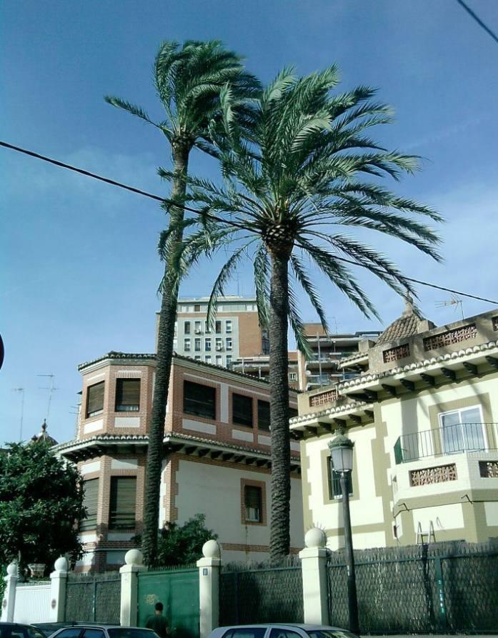 Foto 141 de Jardines (diseño y mantenimiento) en Valencia | Jardinería Vicente Salcedo