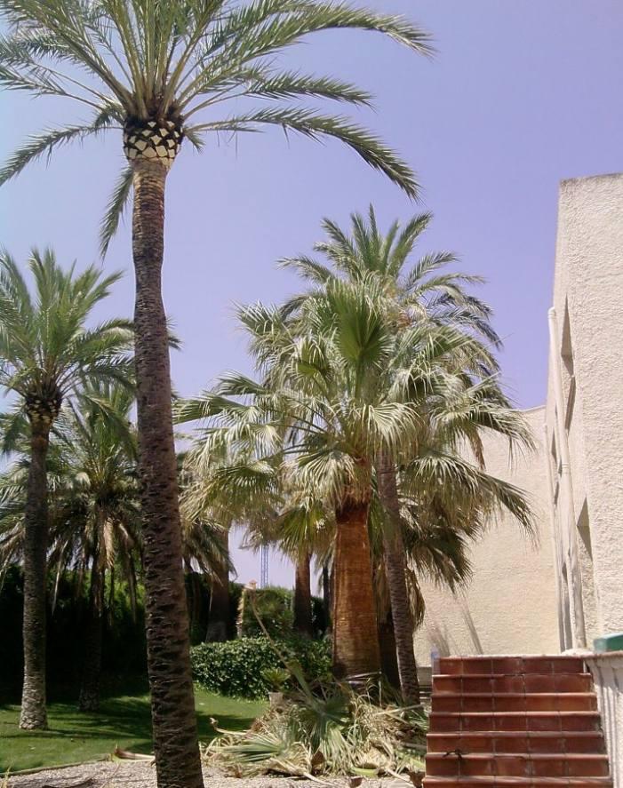 Foto 156 de Jardines (diseño y mantenimiento) en Valencia | Jardinería Vicente Salcedo