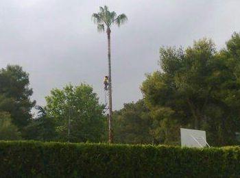 Foto 155 de Jardines (diseño y mantenimiento) en Valencia | Jardinería Vicente Salcedo
