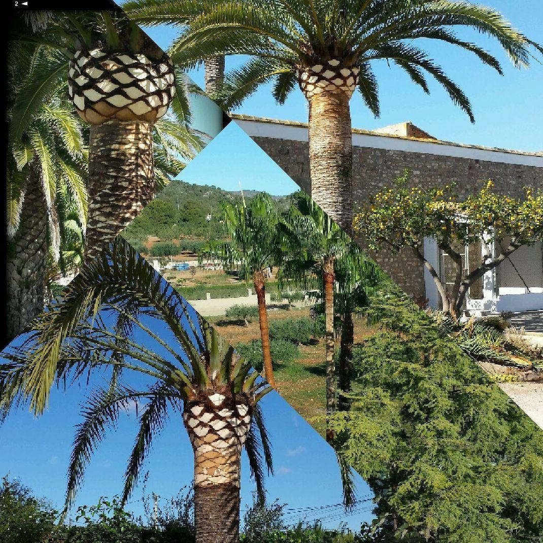 Foto 152 de Jardines (diseño y mantenimiento) en Valencia | Jardinería Vicente Salcedo