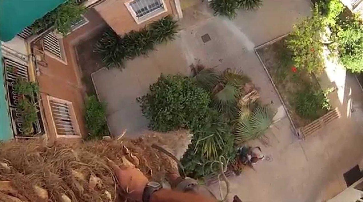 poda de trachicarpus de 12 metros de altura
