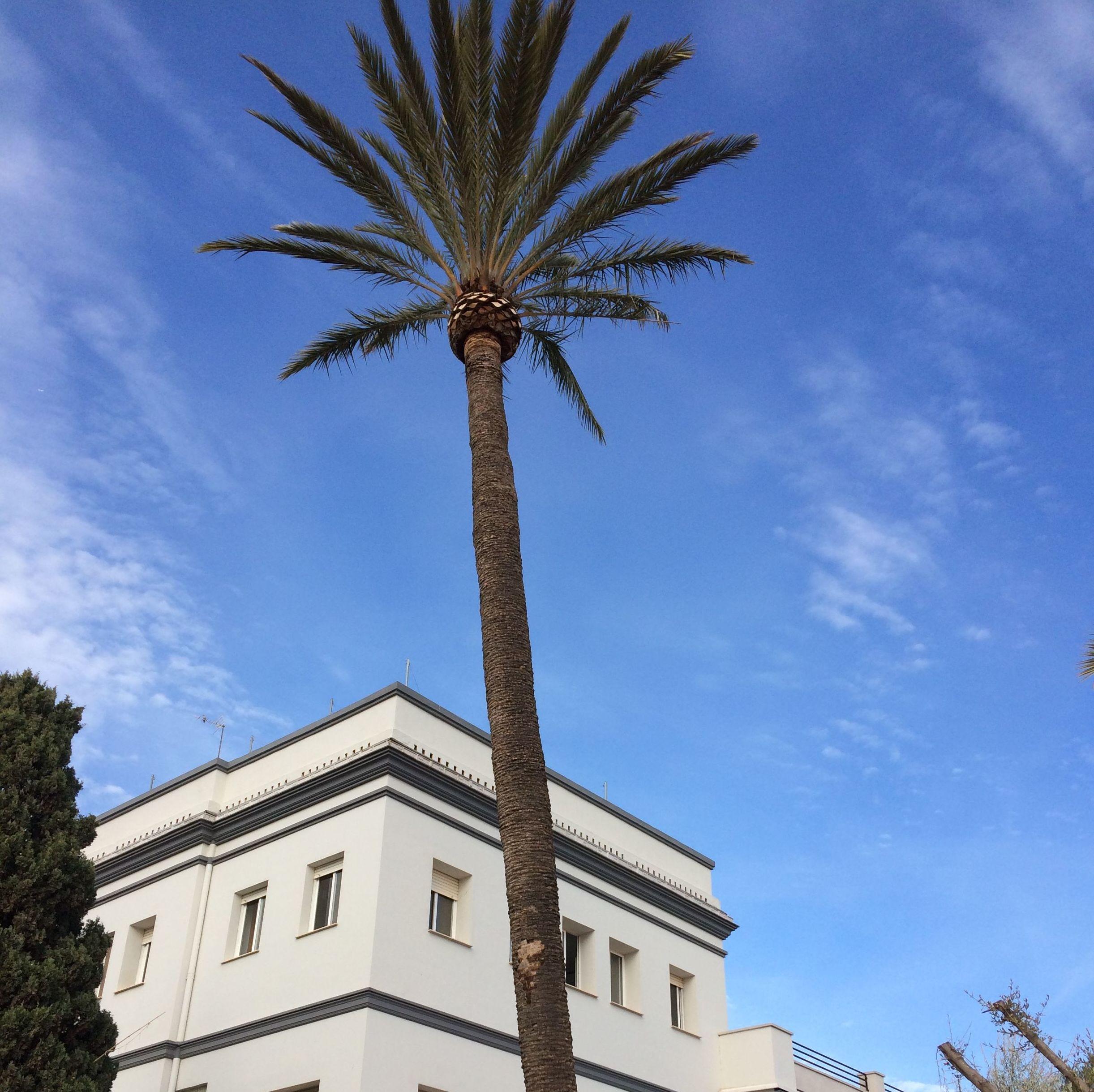 Foto 16 de Jardines (diseño y mantenimiento) en Valencia | Jardinería Vicente Salcedo