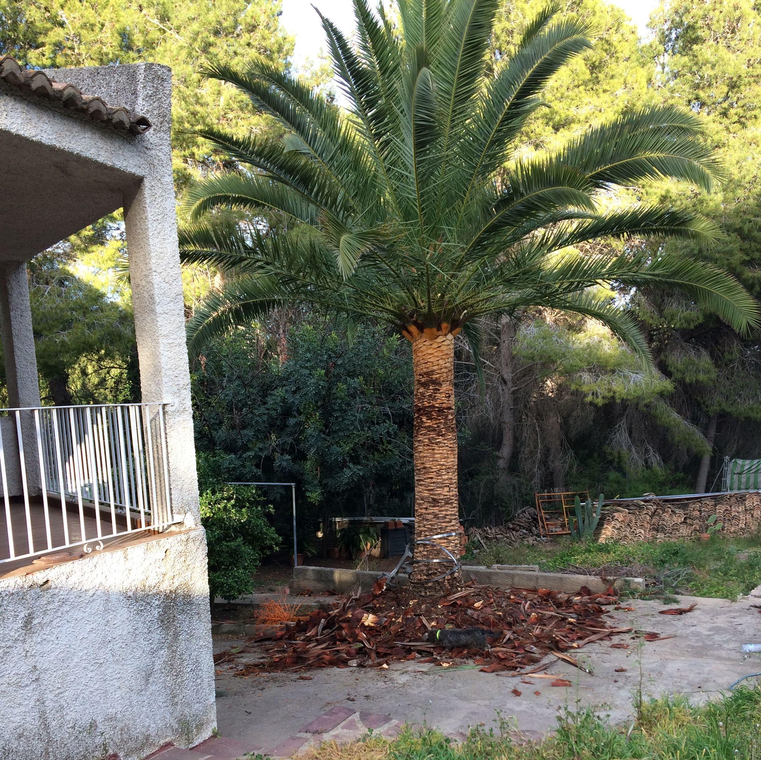 Foto 63 de Jardines (diseño y mantenimiento) en Valencia | Jardinería Vicente Salcedo