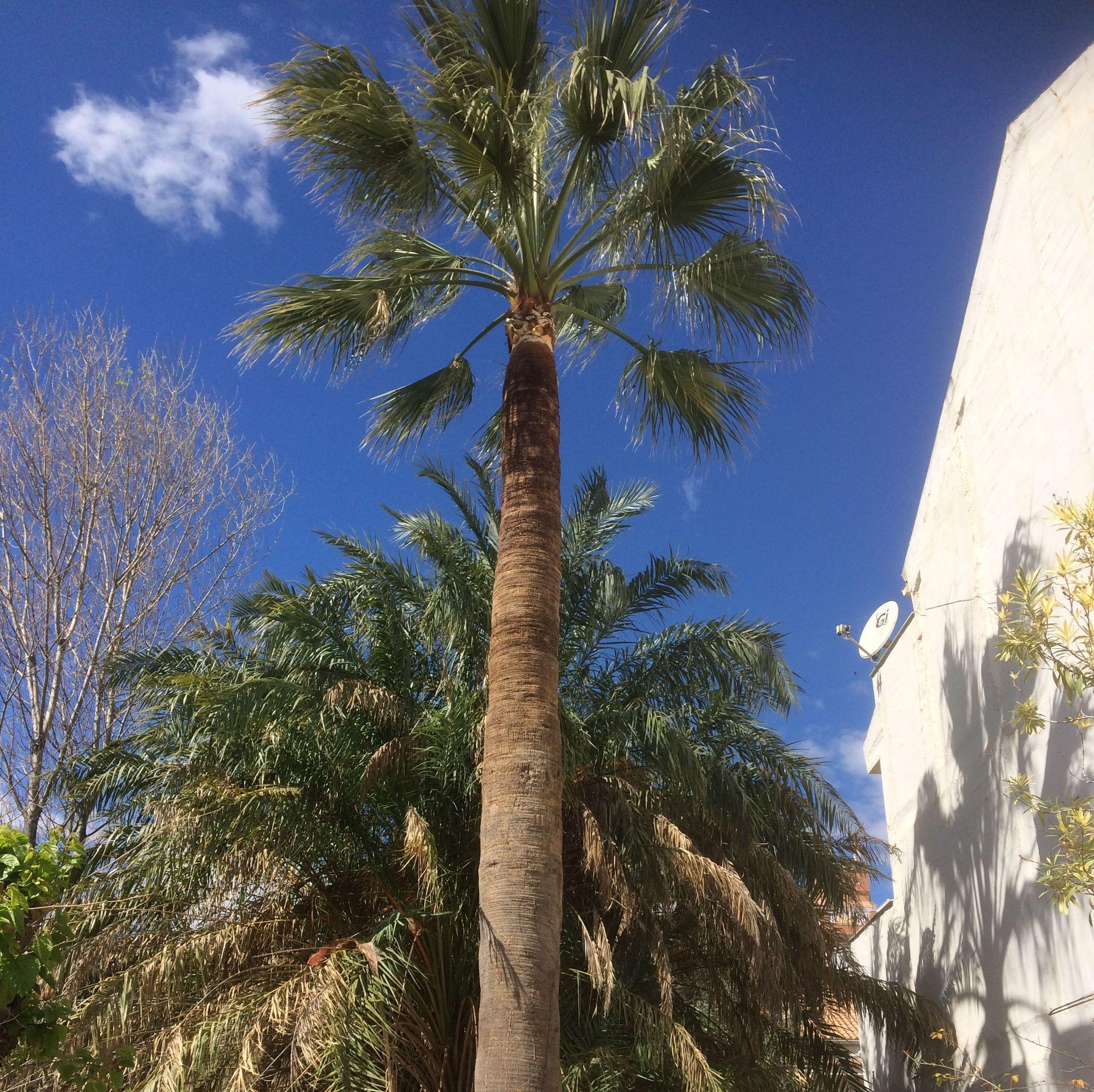 Foto 24 de Jardines (diseño y mantenimiento) en Valencia | Jardinería Vicente Salcedo