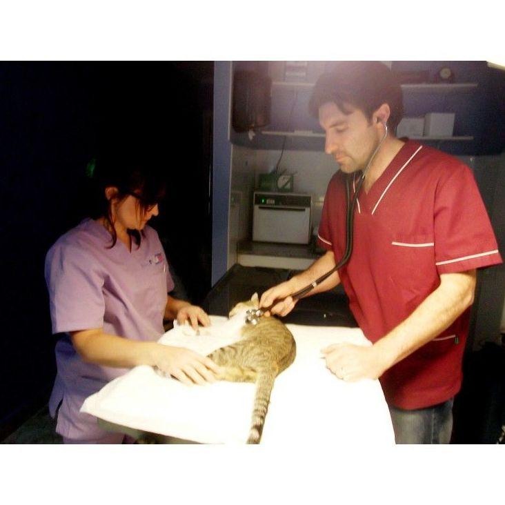 Consultas a domicilio: Servicios de Clínica Veterinaria Vilavet