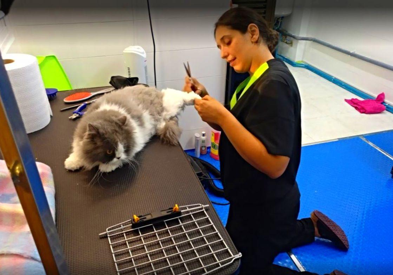 Foto 8 de Tienda de mascotas y peluquería en  | Peluquería Canina y Felina Can Pepa