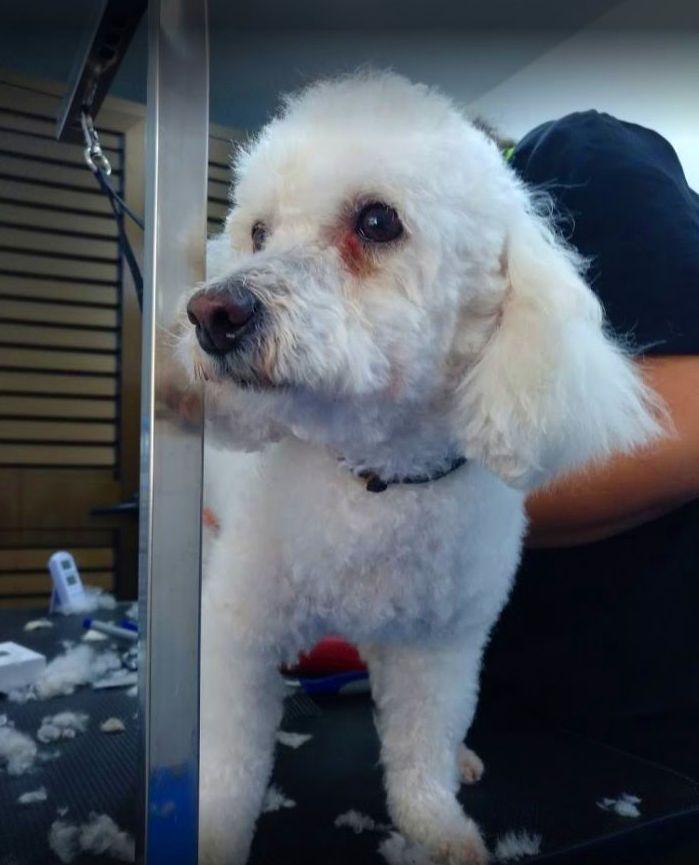 Foto 16 de Tienda de mascotas y peluquería en  | Peluquería Canina y Felina Can Pepa