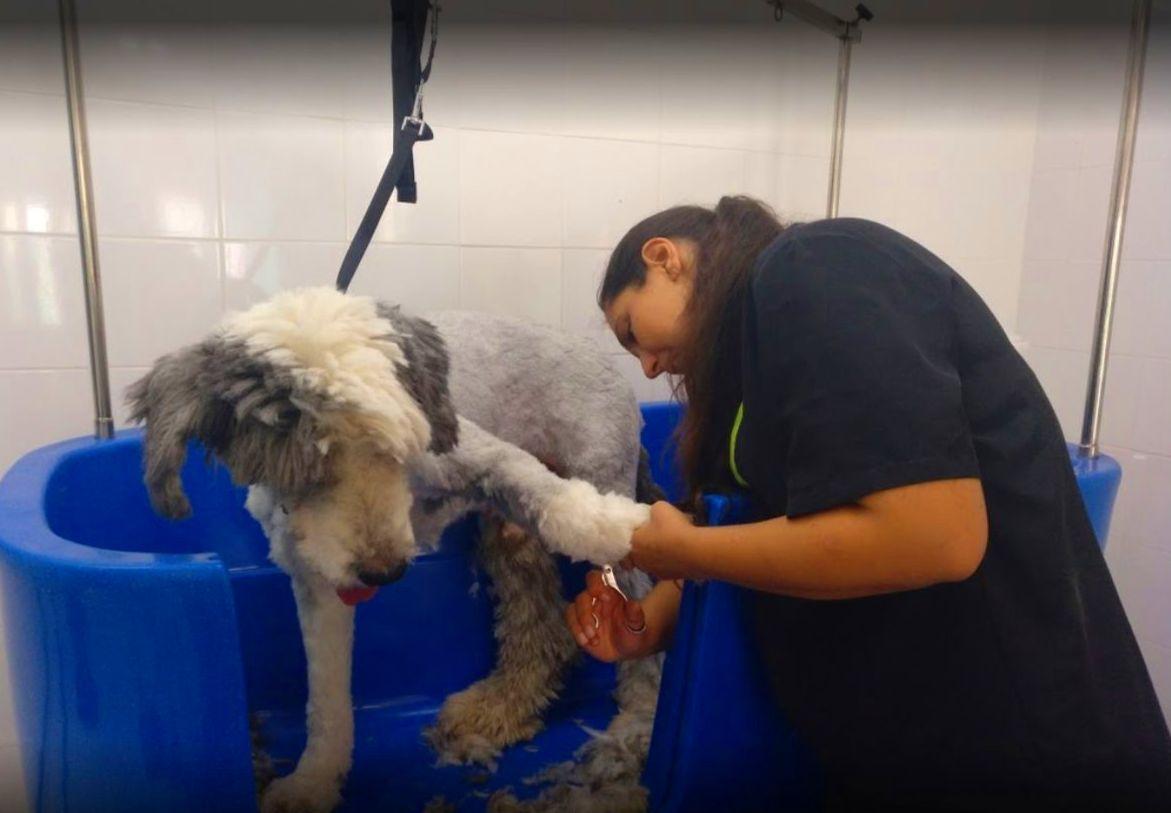 Foto 14 de Tienda de mascotas y peluquería en    Peluquería Canina y Felina Can Pepa
