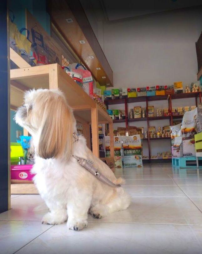 Foto 6 de Tienda de mascotas y peluquería en  | Peluquería Canina y Felina Can Pepa