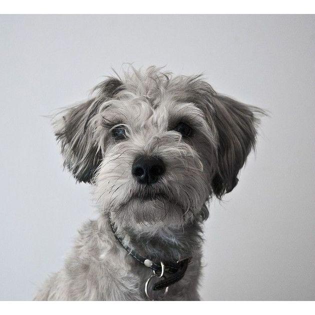 Productos veterinarios: Productos y Servicios de Farmacia Budapest - Multiópticas Loreto