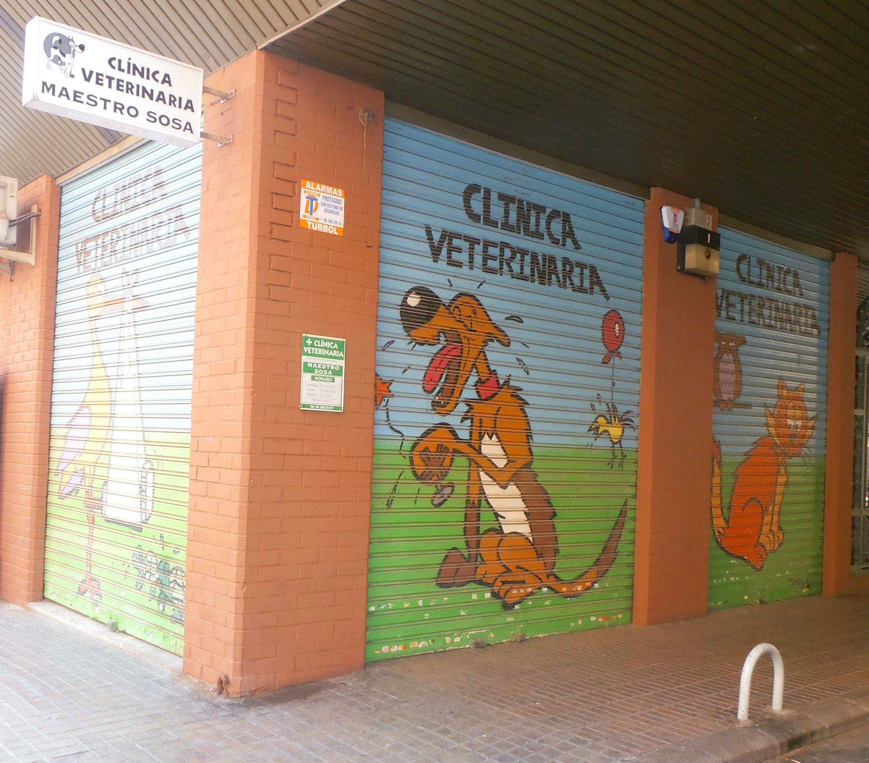 Foto 2 de Veterinarios en Valencia | Clínica Veterinaria Maestro Sosa
