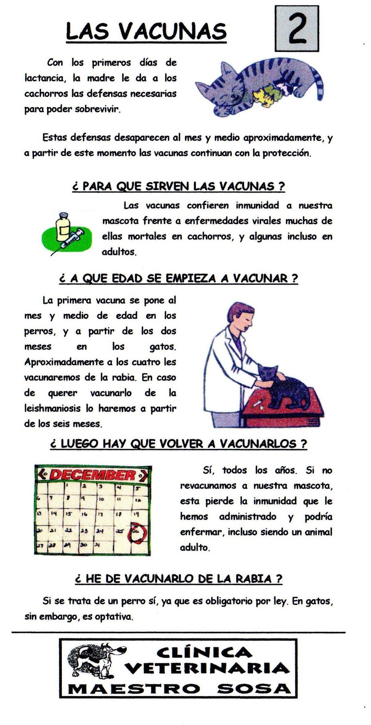 Las vacunas: Consejos de Clínica Veterinaria Maestro Sosa