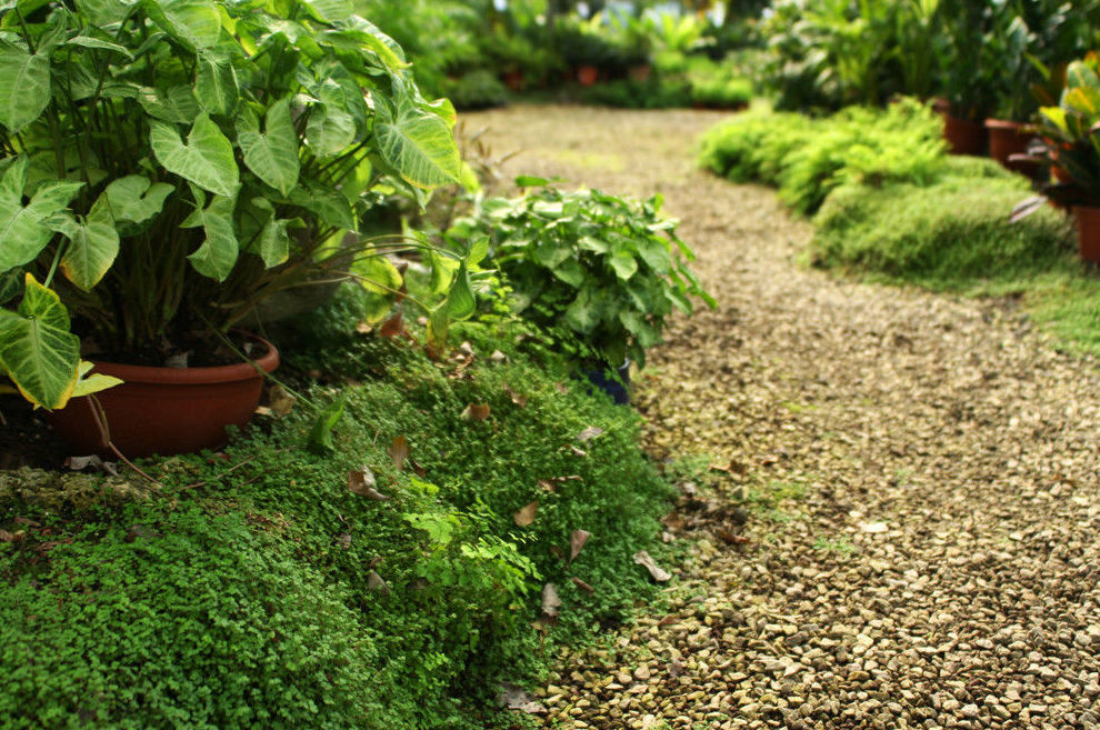 Creación de jardines en Girona
