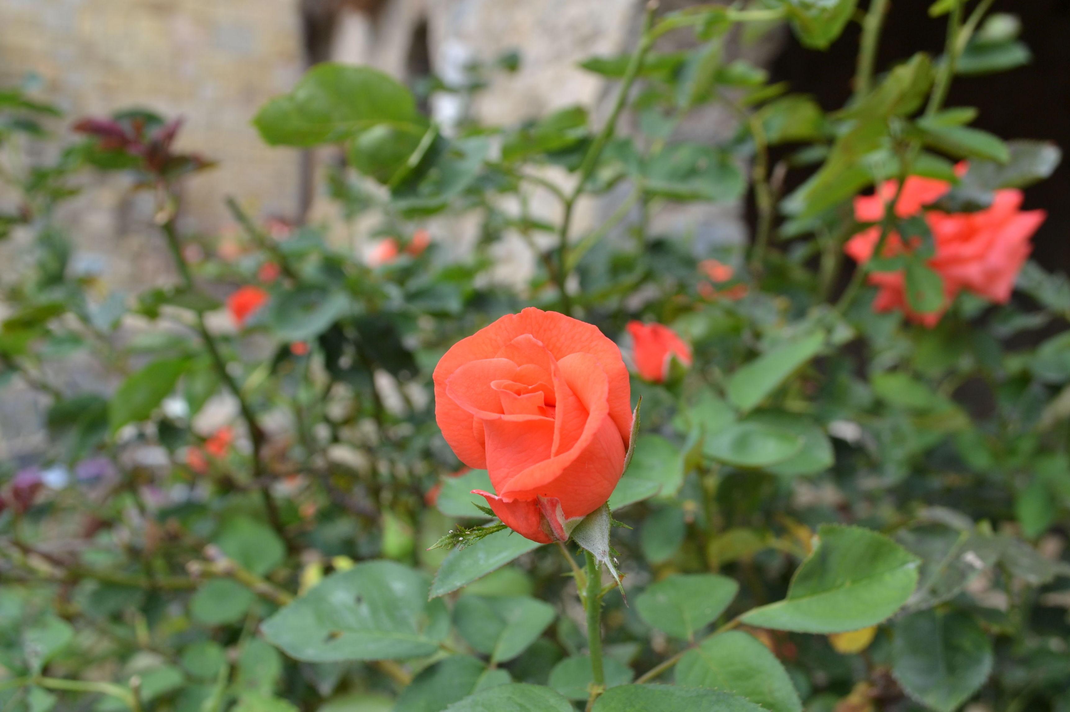 Empresa de jardinería en Girona. Mantenimiento de jardines