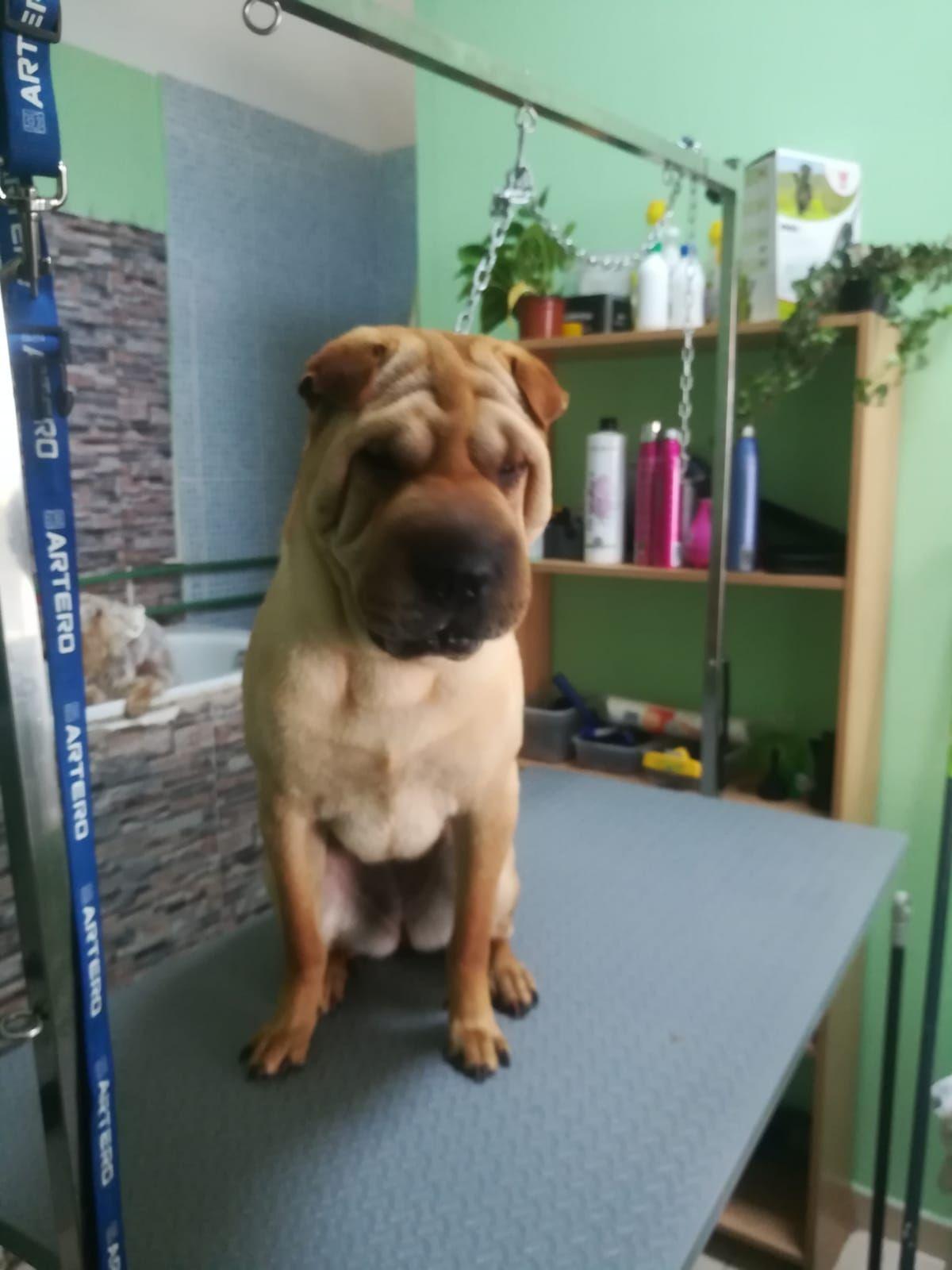 Foto 2 de Peluquería y tienda para mascotas en  | Que Guau