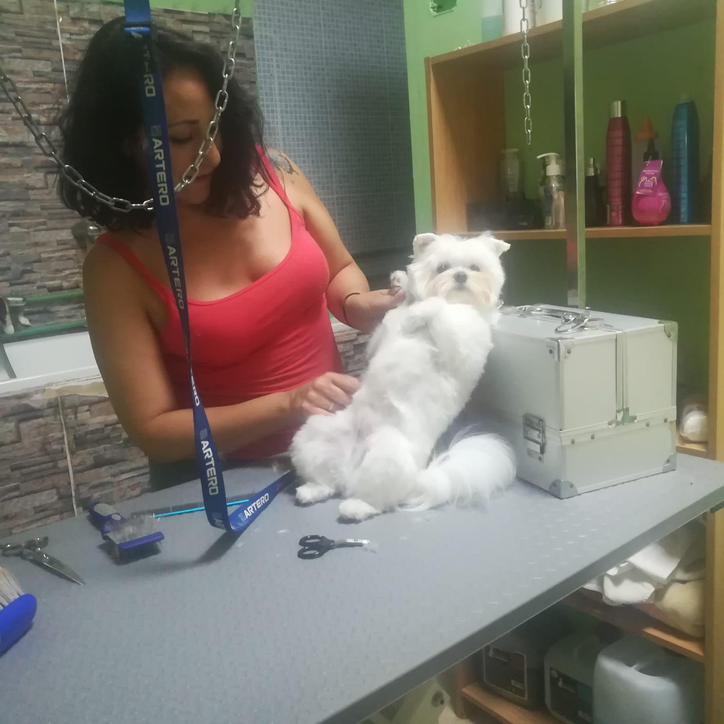Foto 19 de Peluquería y tienda para mascotas en  | Que Guau