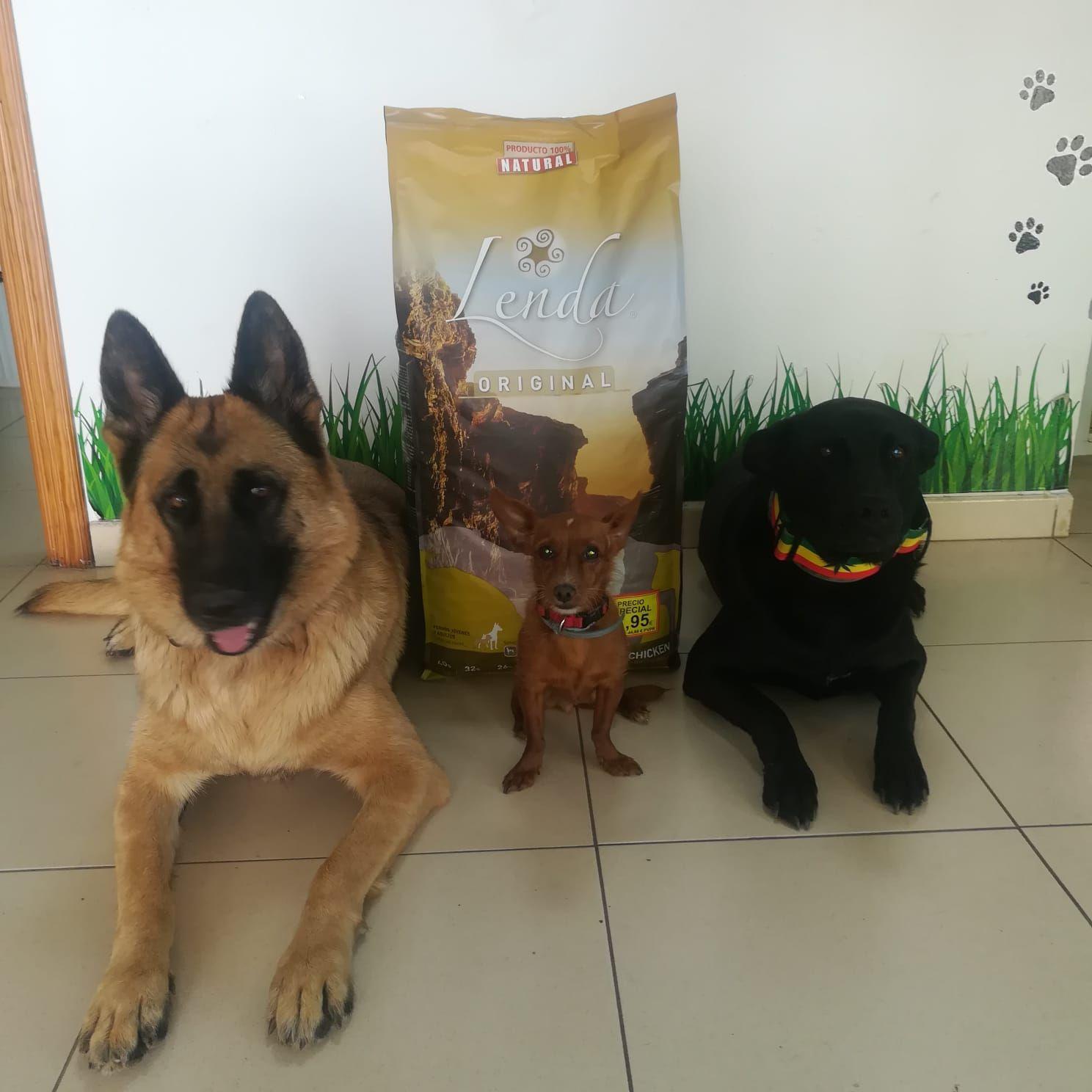 Foto 13 de Peluquería y tienda para mascotas en  | Que Guau