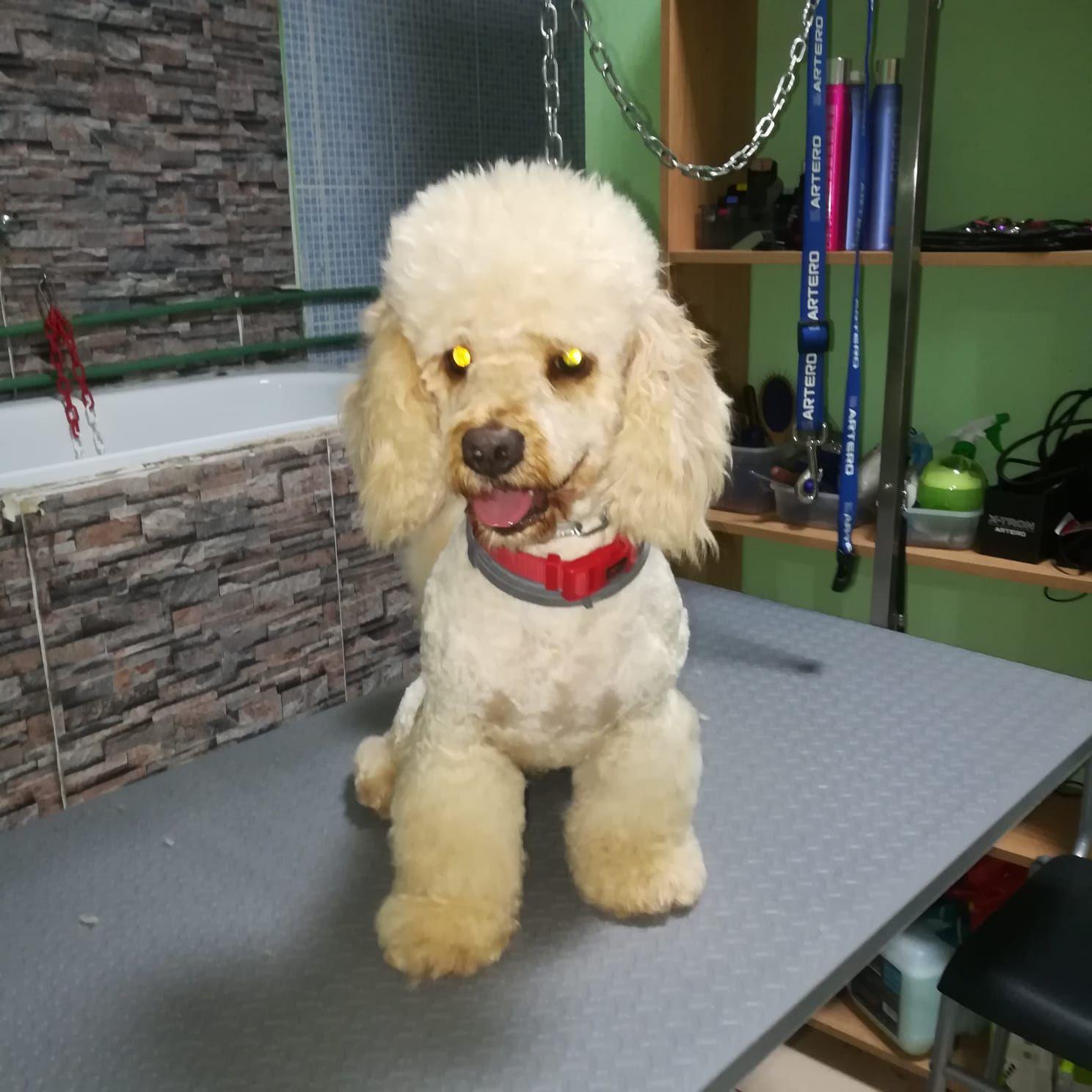 Foto 27 de Peluquería y tienda para mascotas en  | Que Guau