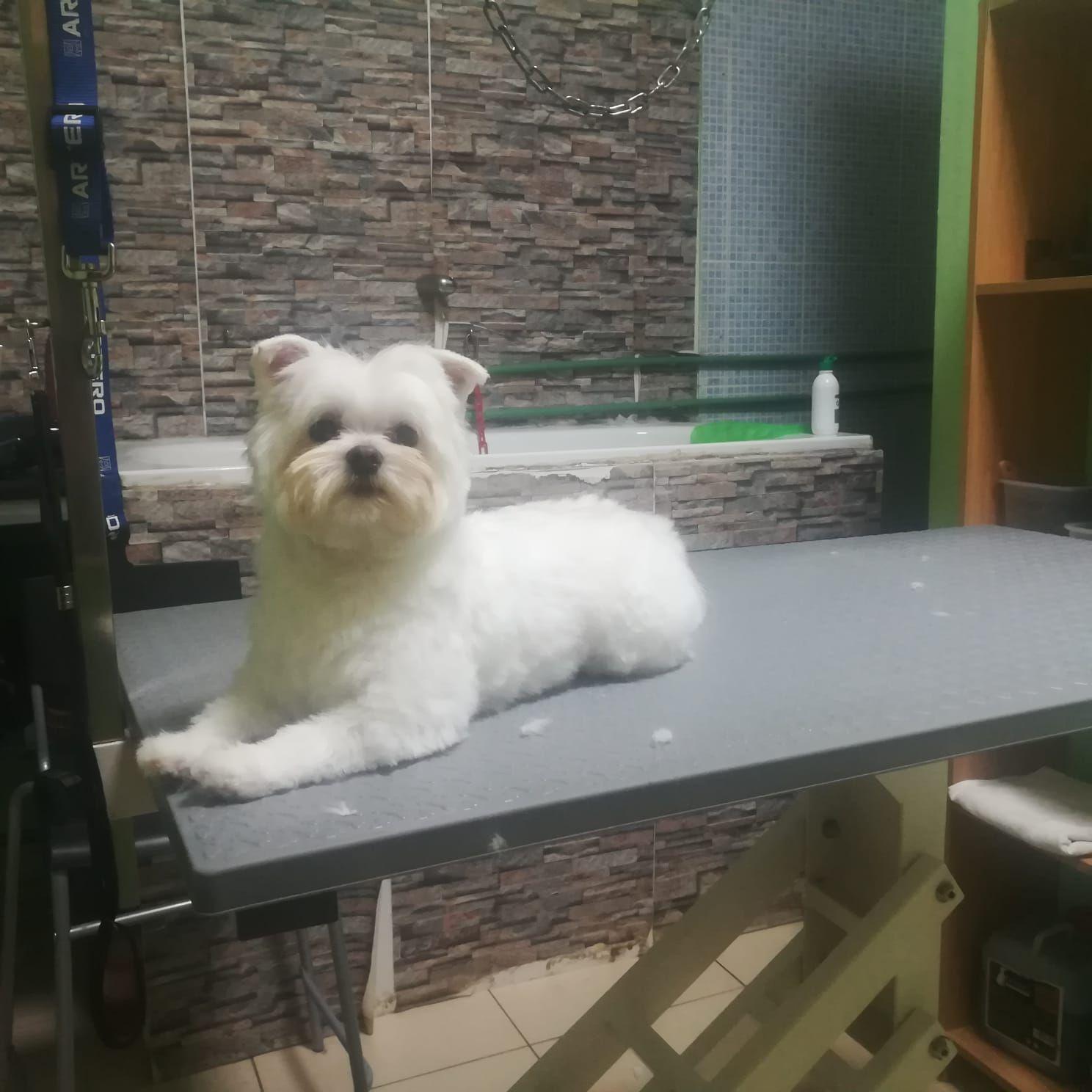 Foto 26 de Peluquería y tienda para mascotas en  | Que Guau