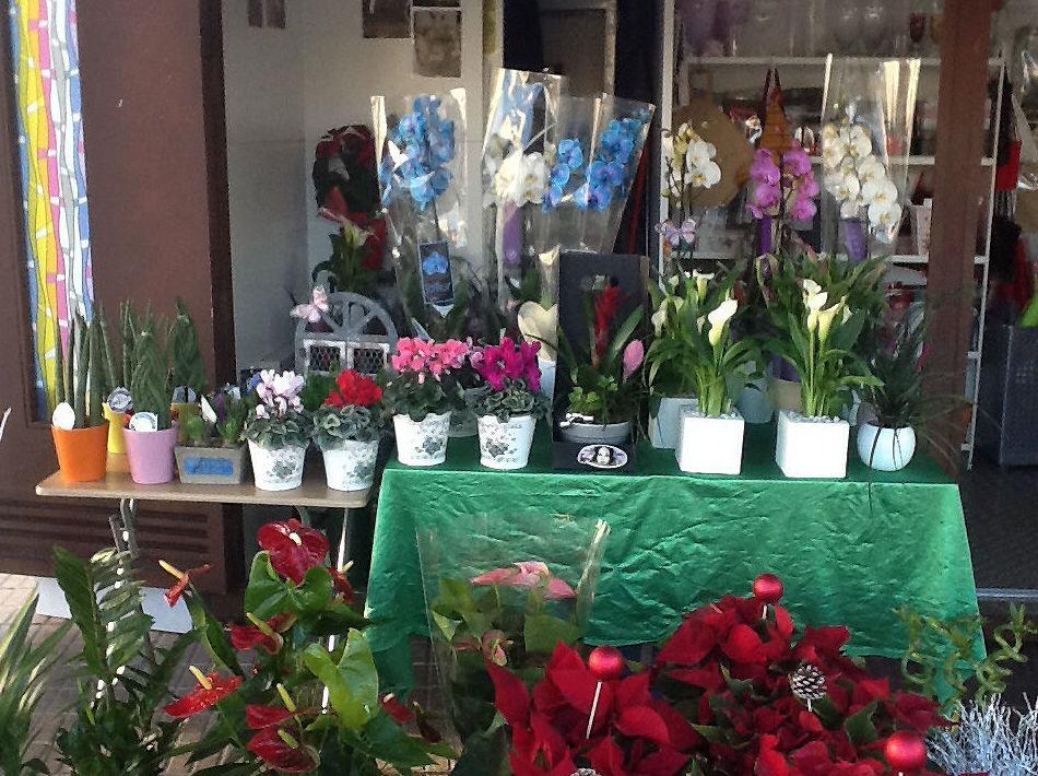 Gran variedad de plantas y flores de todos los precios
