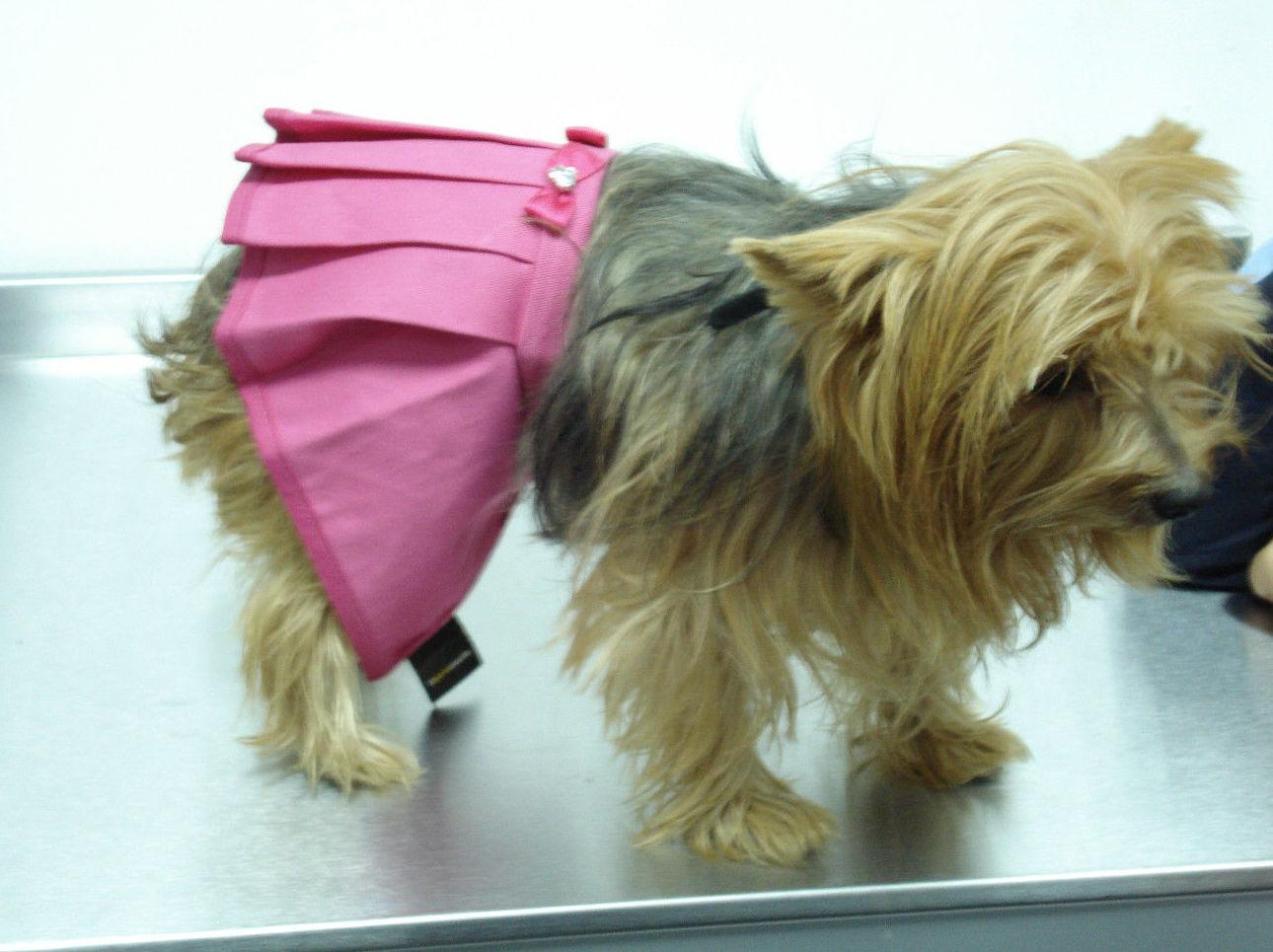 Clínica veterinaria en Almería