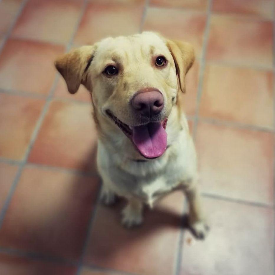 Foto 9 de Clínica veterinaria en  | Arca Veterinaria