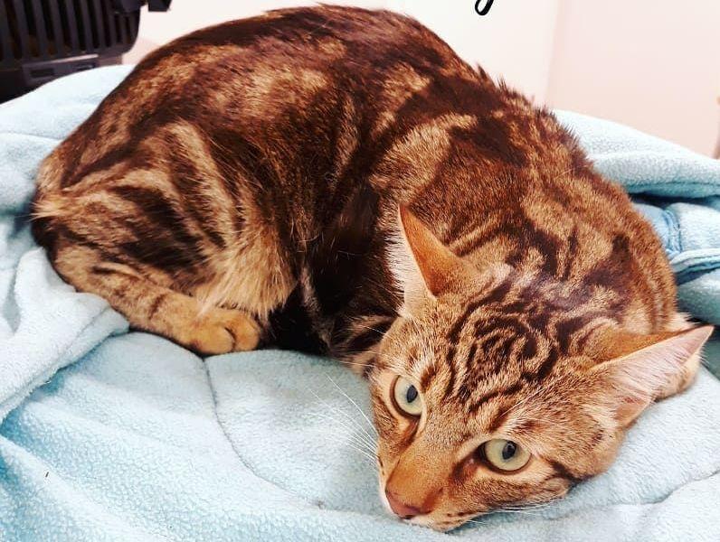 Foto 7 de Clínica veterinaria en  | Arca Veterinaria