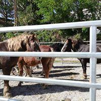 Servicios veterinarios Caldes de Montbui