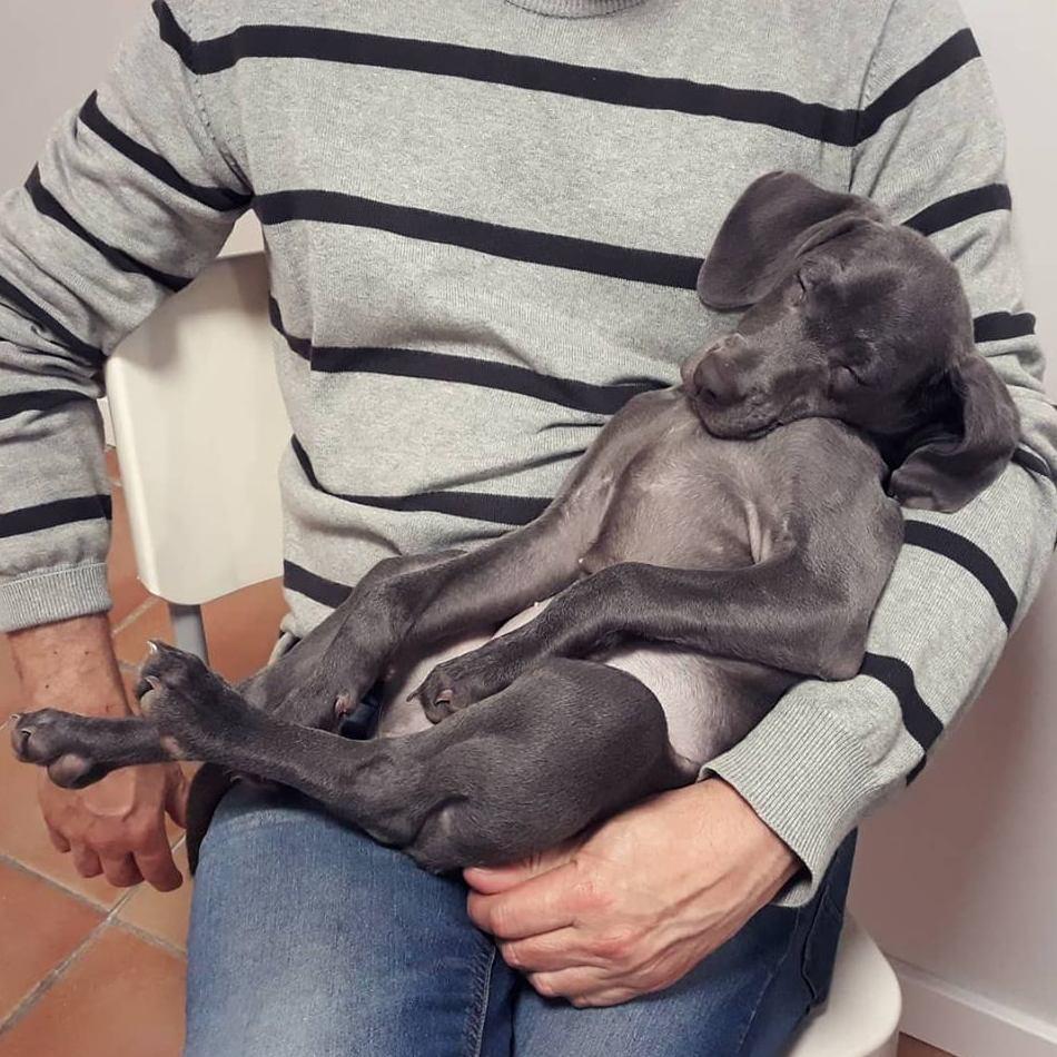 Foto 15 de Clínica veterinaria en  | Arca Veterinaria