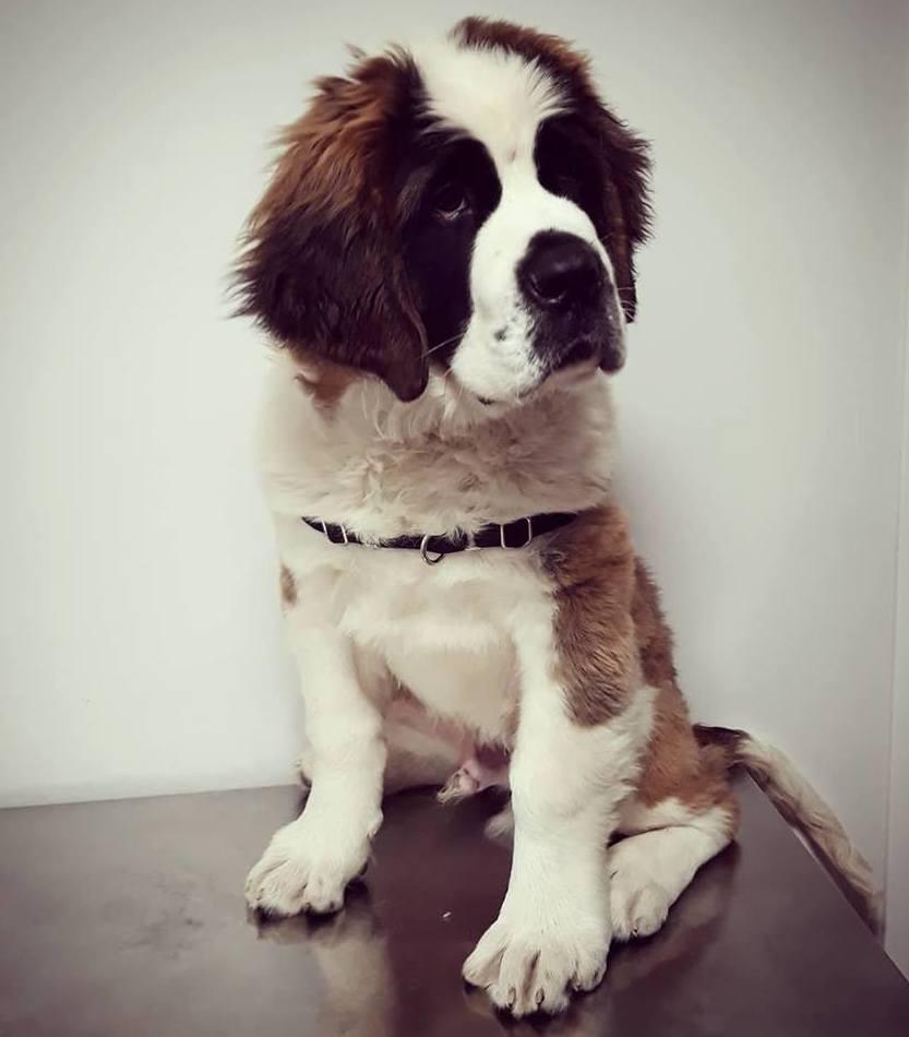 Foto 1 de Clínica veterinaria en  | Arca Veterinaria