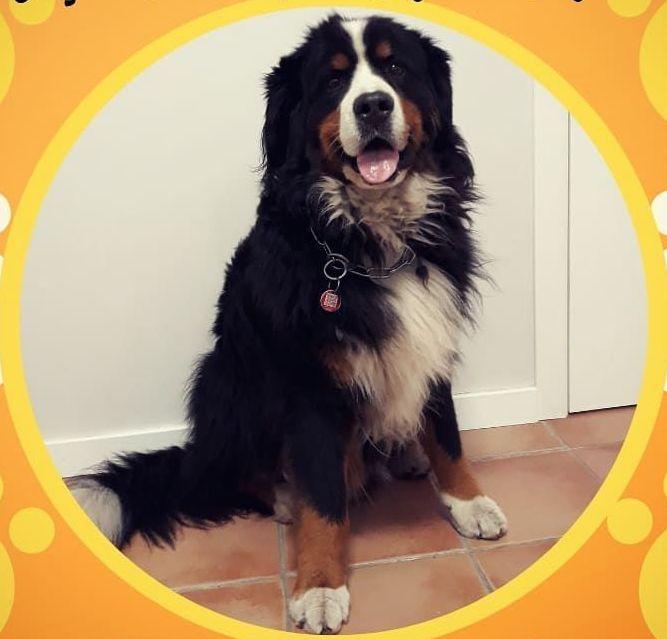 Foto 14 de Clínica veterinaria en  | Arca Veterinaria