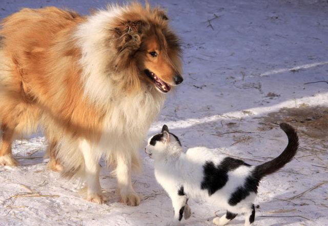 Condiciones para las mascotas que visitan la casa