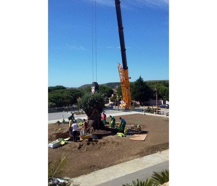 Plantación de árboles en San Roque, Cádiz