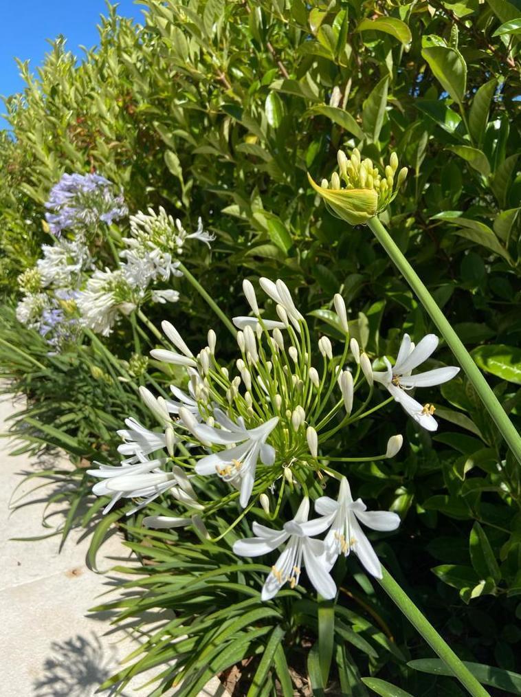 Foto 5 de Diseño y mantenimiento de jardines en San Roque | Sotojardín