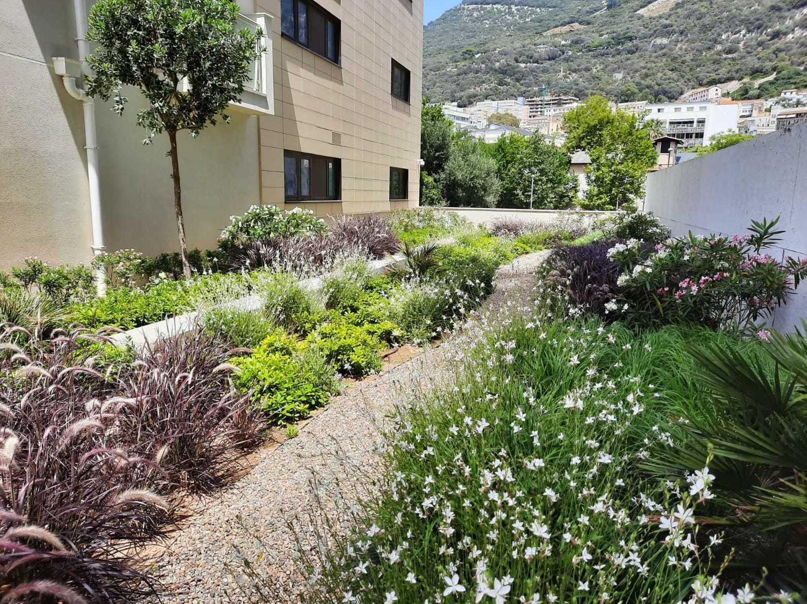 Foto 1 de Diseño y mantenimiento de jardines en San Roque | Sotojardín