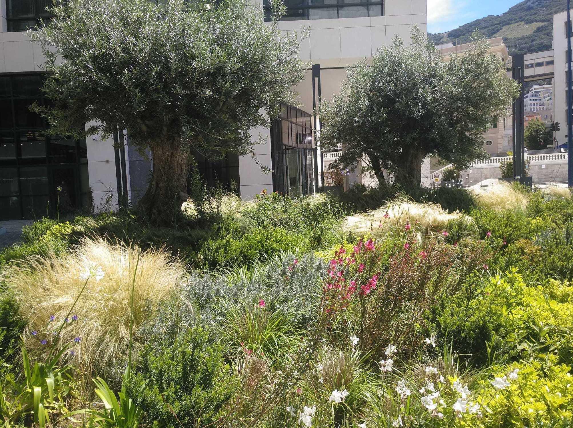 Foto 9 de Diseño y mantenimiento de jardines en San Roque | Sotojardín