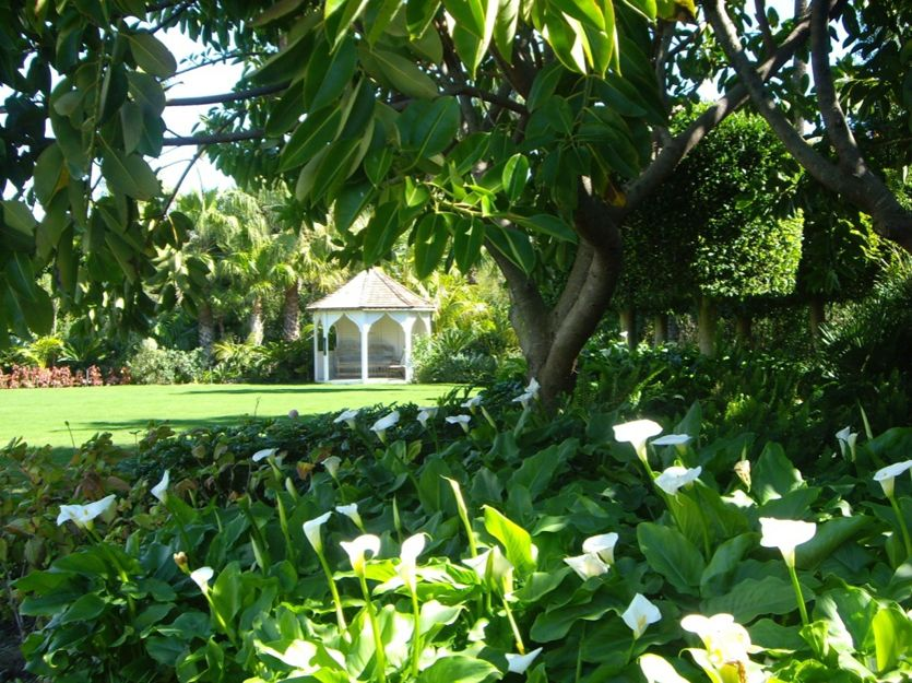Mantenimiento integral de jardines en San Roque, Cádiz