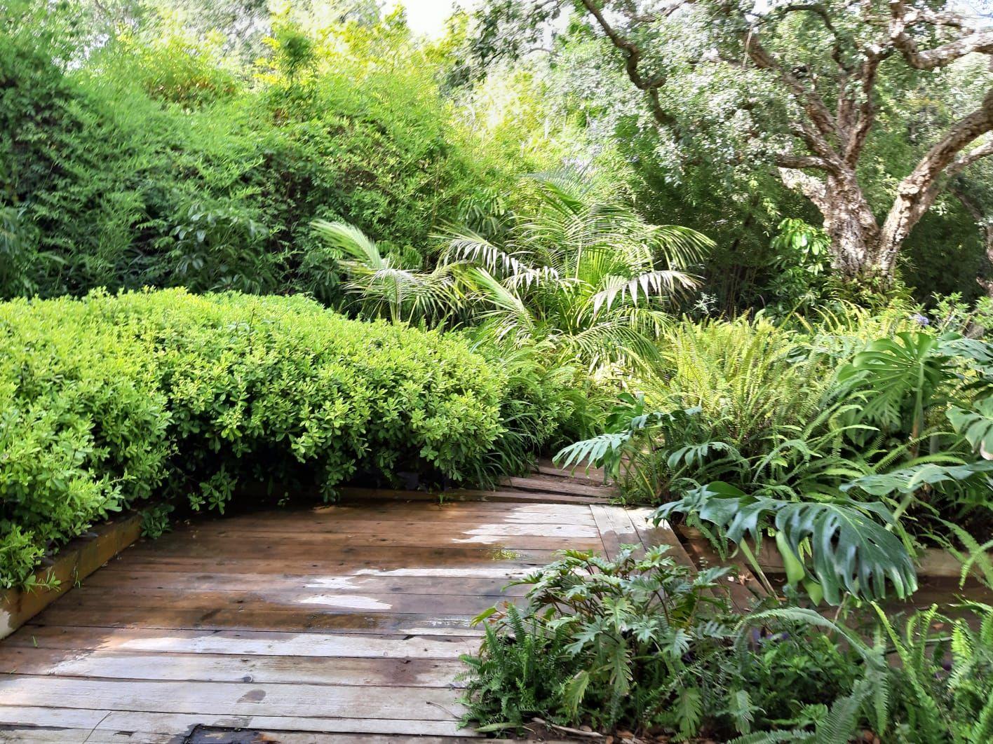 Foto 31 de Diseño y mantenimiento de jardines en San Roque | Sotojardín