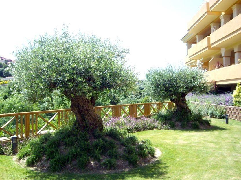 Empresas de jardinería en San Roque, Cádiz
