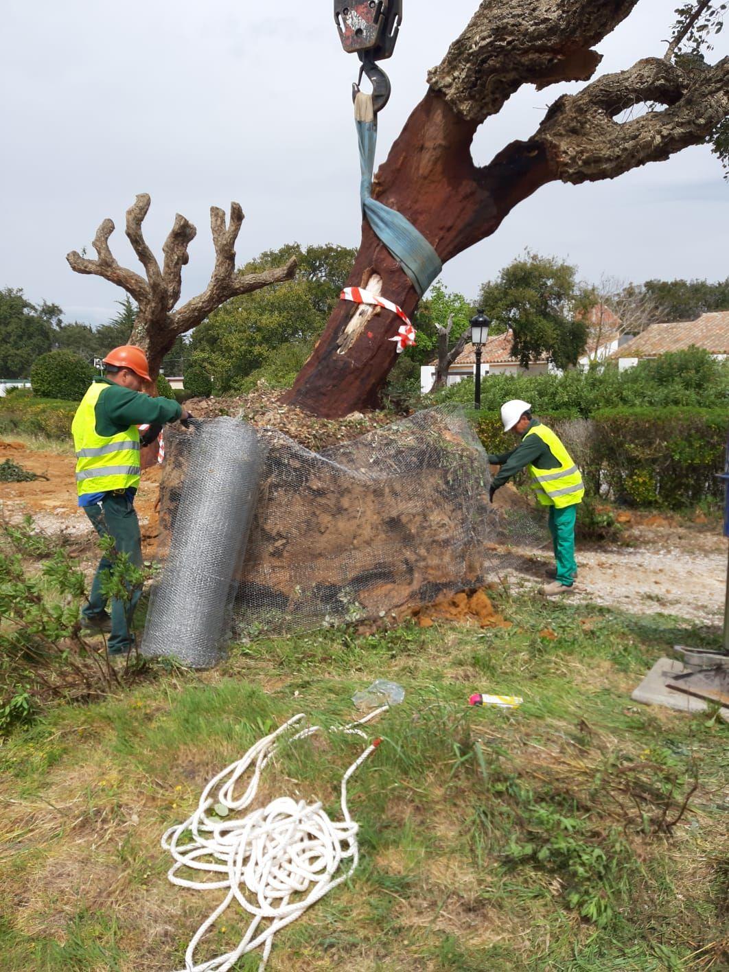 Foto 16 de Diseño y mantenimiento de jardines en San Roque | Sotojardín