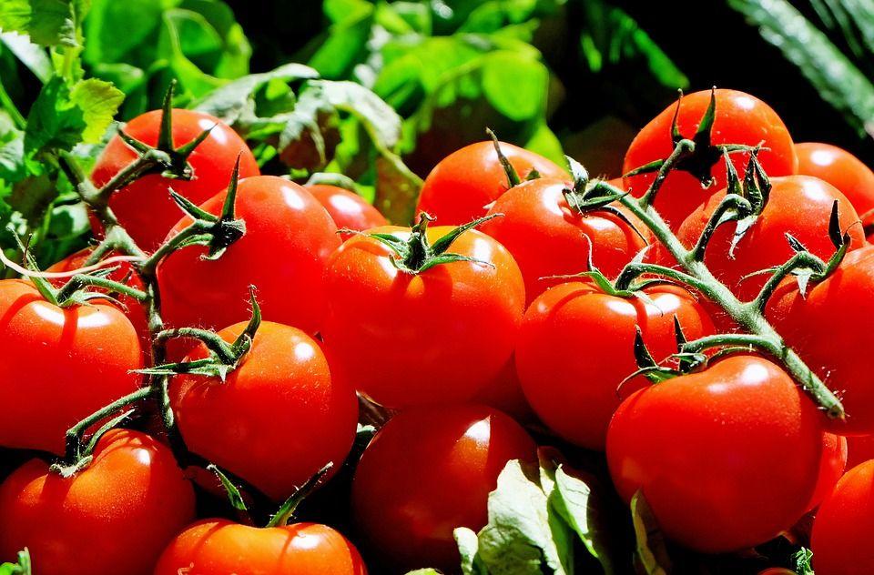 Tomates zaragozanos: Productos y servicios de Ecozara