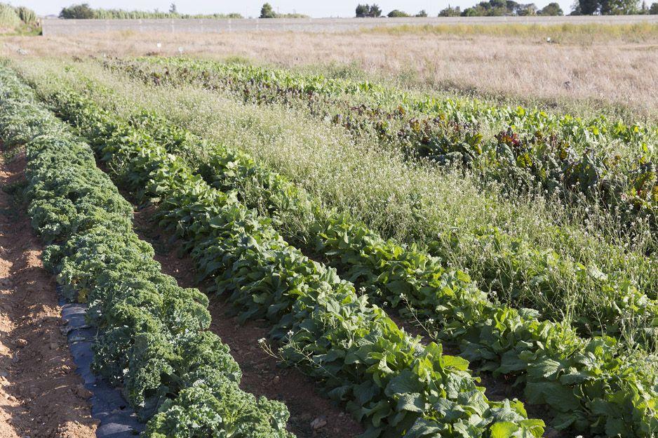 Verdura ecológica de proximidad en Zaragoza