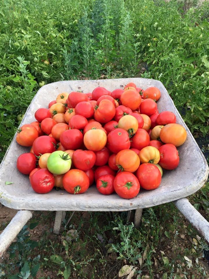 Hortalizas ecológicas: Productos y servicios de Ecozara