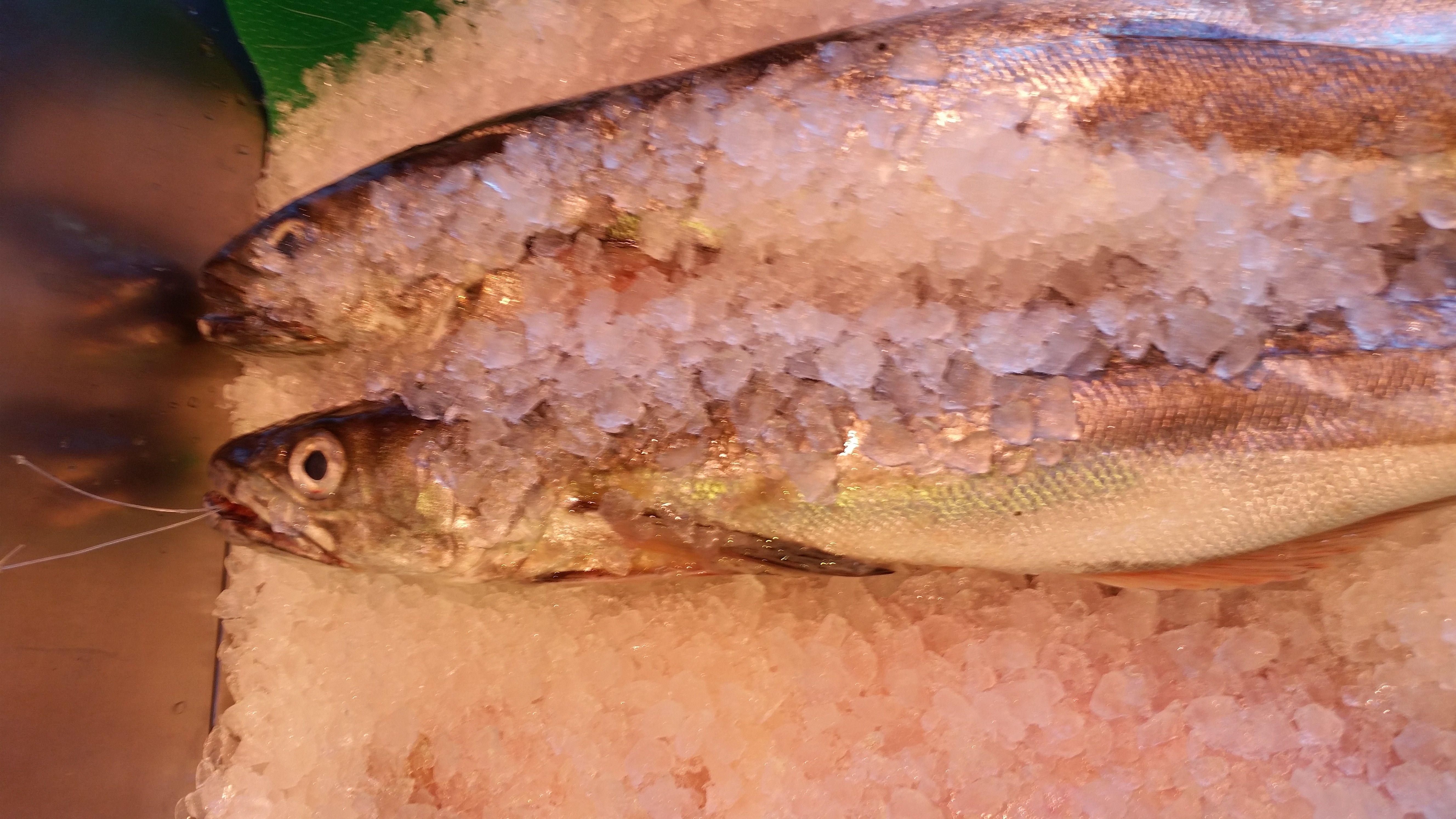 Pescado selecto Soto del Real