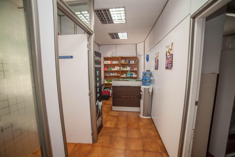 Centro veterinario en Torrent especializado en medicina felina