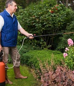 Tratamiento con insecticidas