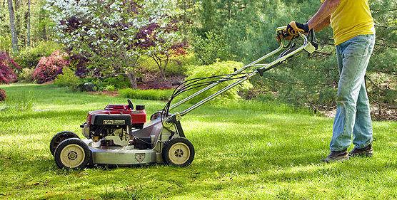 Limpieza y mantenimiento de jardines: Servicios  de Multiservicios Elite