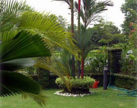 Foto 1 de Jardines (diseño y mantenimiento) en Vélez-Málaga | Plante Verde