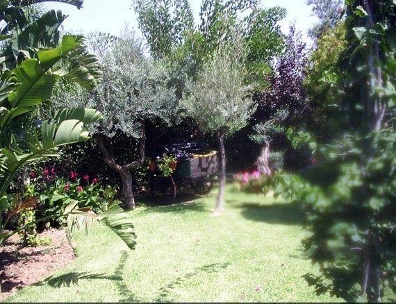 Foto 8 de Jardines (diseño y mantenimiento) en Vélez-Málaga | Plante Verde