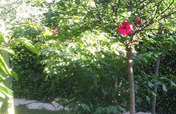 Foto 6 de Jardines (diseño y mantenimiento) en Vélez-Málaga | Plante Verde
